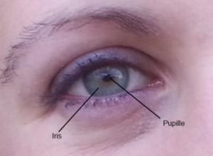 Couleur de l'iris